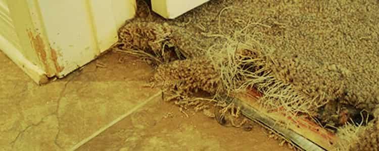 Best Carpet Repair Howrah